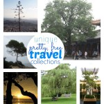 C.R.A.F.T. # 20: Travel Collections