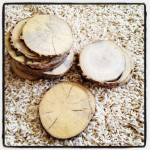 Wood slice coasters {best coasters}
