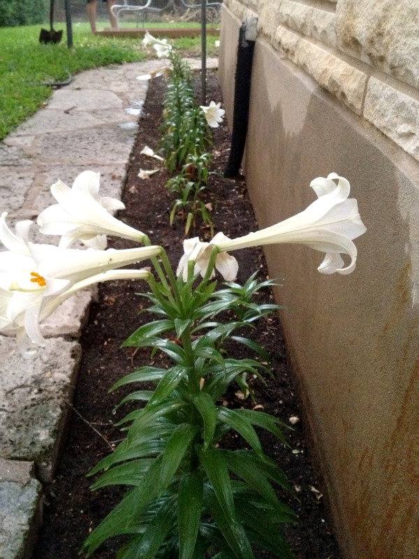 Unique flowers beds