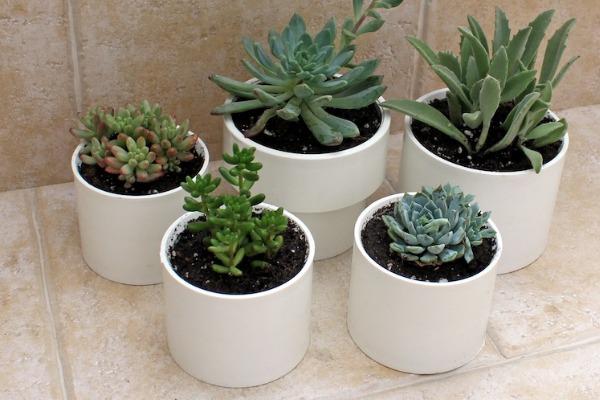 pvc pipe vases